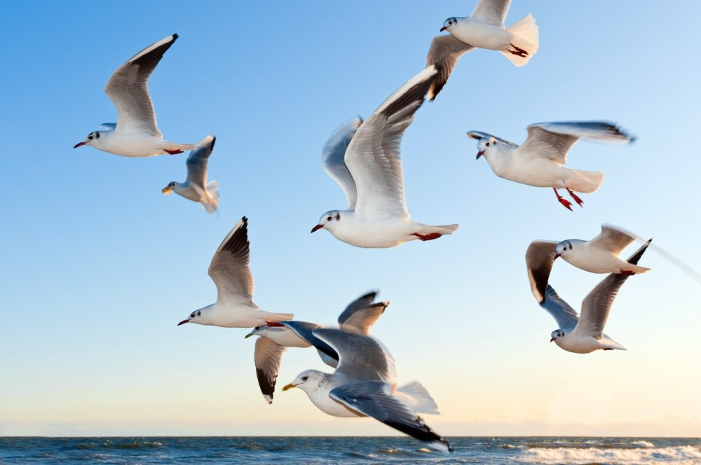 gulls-bird-fly-coast-54462
