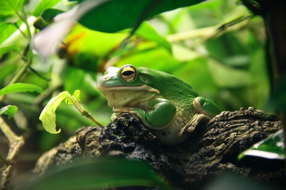 frog-terrarium-amphibians